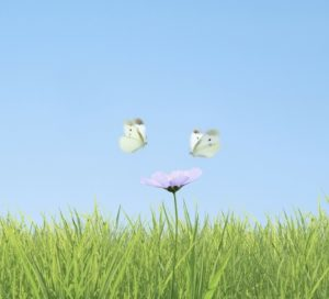 butterflies-two-1600x1200-wallpaper_www-wallpaperswa-com_62