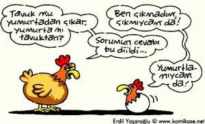 tavuk-yumurta